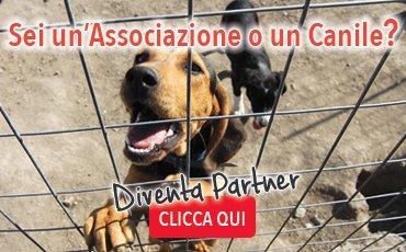 banner_asscanili