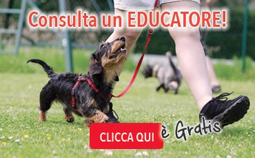 consulta un educatore