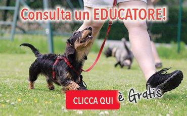 banner_educatore