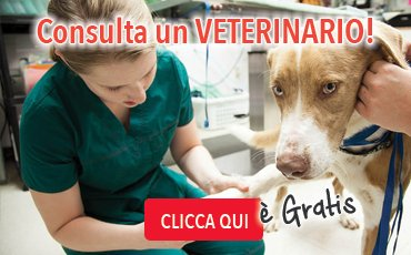 consulta un veterinario