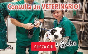 banner_veterinario2
