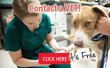 banner_veterinario_eng