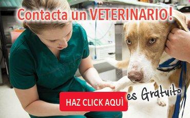 banner_veterinario_es