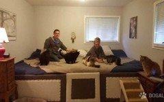 Costruiscono letto gigante per dormire con cani e gatti