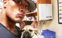 Adios Brutus, el chiquito bulldog de Dwayne Johnson