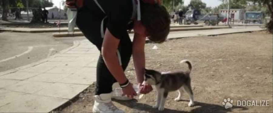 Fuga con cane dalla siria: la storia di Aslan e Rose