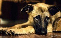 Hombre roba perros a expareja: acusado