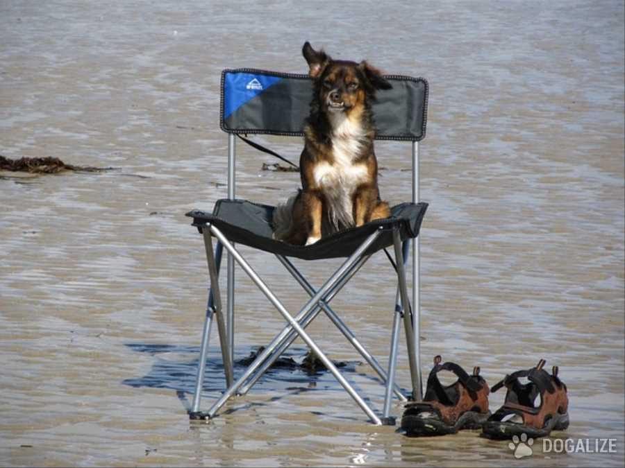Spiagge Pet friendly: Niente spiaggia per cani a Jesolo