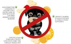 Giocare con il cucciolo: cosa NON fare |