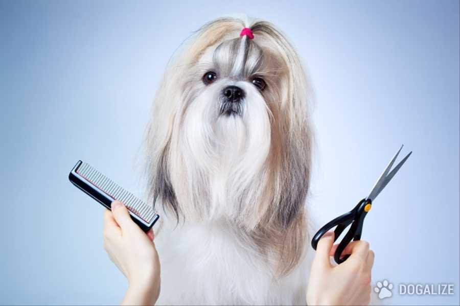 España, prohibiran la cirugìa estética en perros y gatos