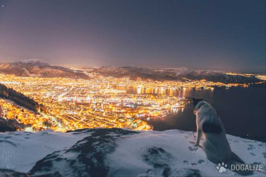 Huida con perro: abandona todo y se va de viaje con su perro