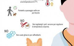 Salute Cane: il benessere del cane in estate