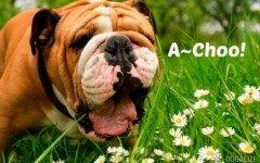 Como prevenir alergias provocadas por las mascotas?