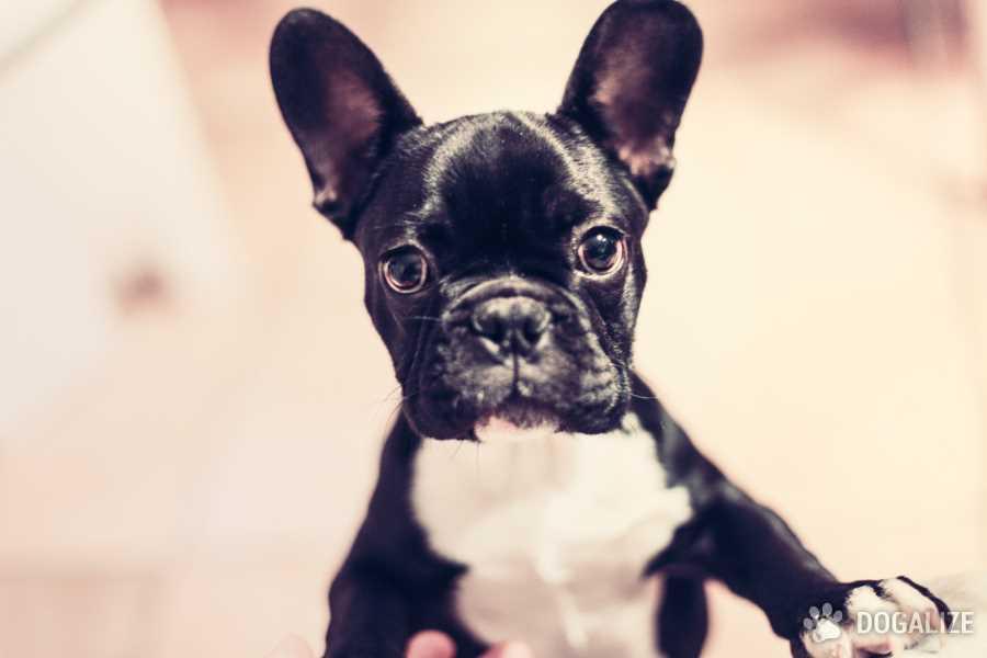 Lo sapevi che i cani capiscono ciò che diciamo ? Non ci credi? Uno studio lo dimostra! Scopri di più sui poteri dei cani e quello che sanno fare!