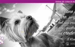 """Un cane può trovare, perfino nel più inutile di noi, qualcosa in cui credere"""" perchè i nostri amici a quattro zampe ci stanno sempre vicini"""