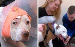 Il cane eroe Kiko, che salvò l'ex proprietario, è stato adottato