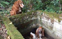 Cane veglia sull'amica caduta in una cisterna