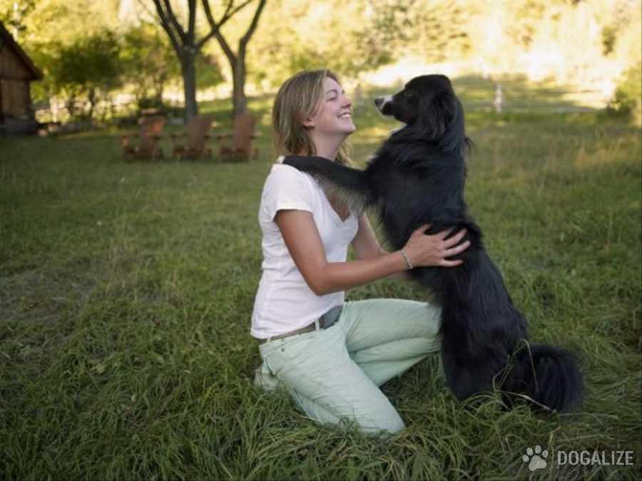 Los perros prefieren interactuar con humanos