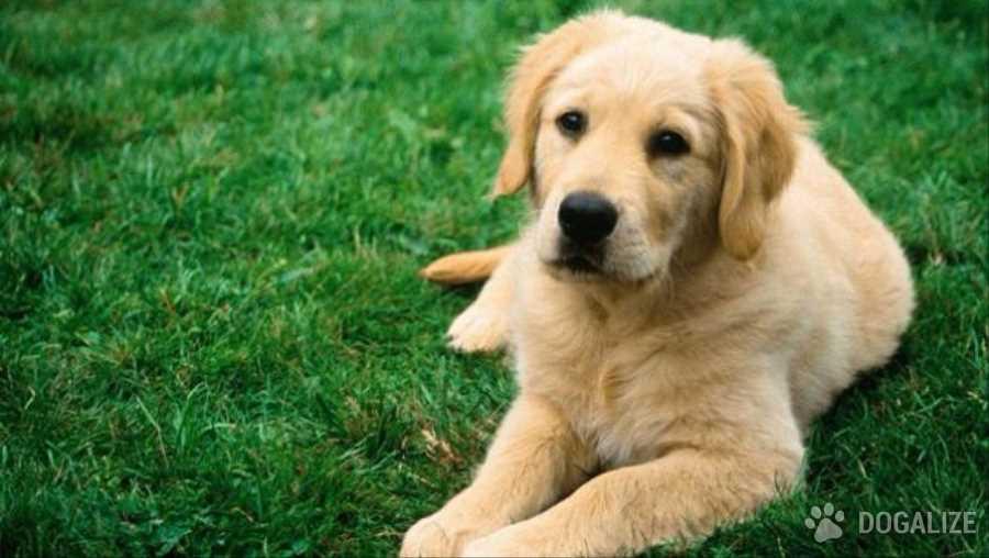 Chile: inventan anticonceptivo para perros