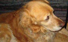 Cane in chiesa: cacciati dal parroco