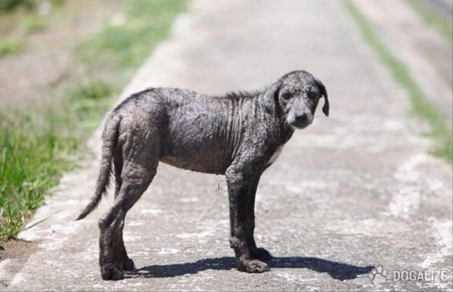 Puerto Rico, hay crisis de perros abandonados