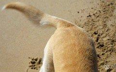 Code tagliate a cani e gatti: il mistero di Sao Lourenco