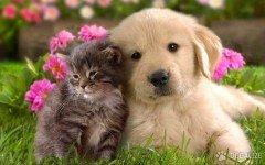 Los gatos son mas independientes de los perros?