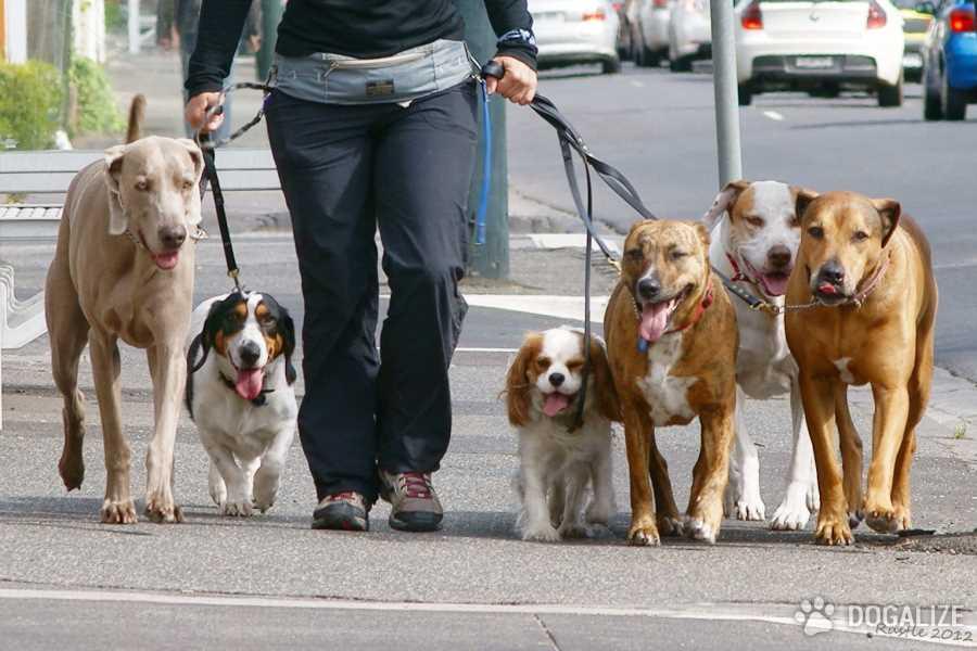 Bambini a Lecce portano a spasso i cani del canile