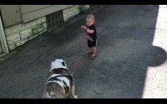 Un bebe intenta pasear su perro bulldog... de 36 kilos !