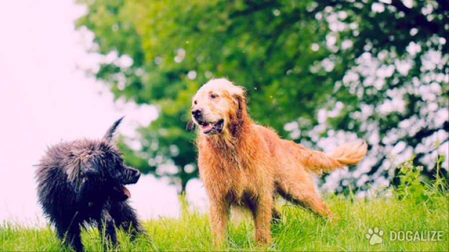 Parco vietato ai cani: una raccolta firme