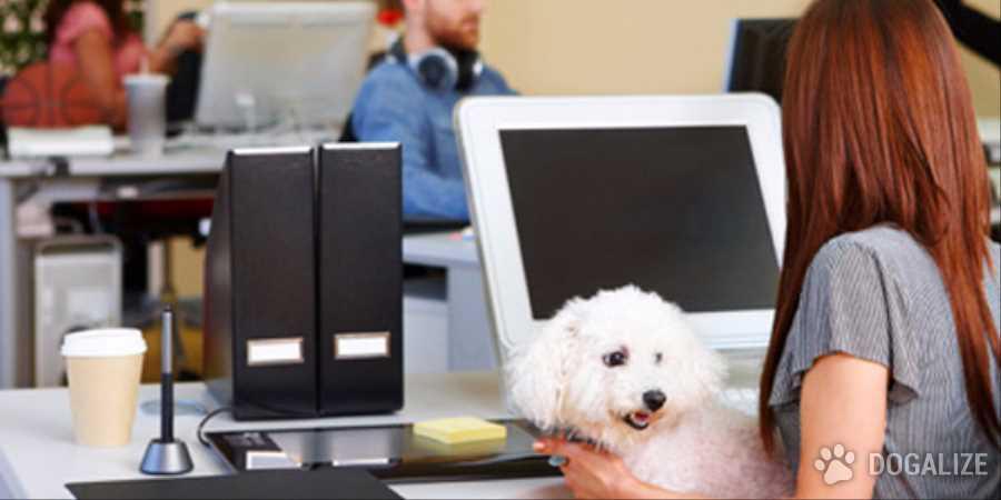 In ufficio con il cane