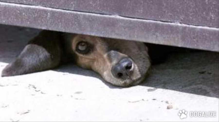 Cagnolino maltrattato e lasciato in canile: salvato e adottato | Dogalize