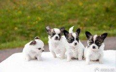 volontari enpa salvano cuccioli