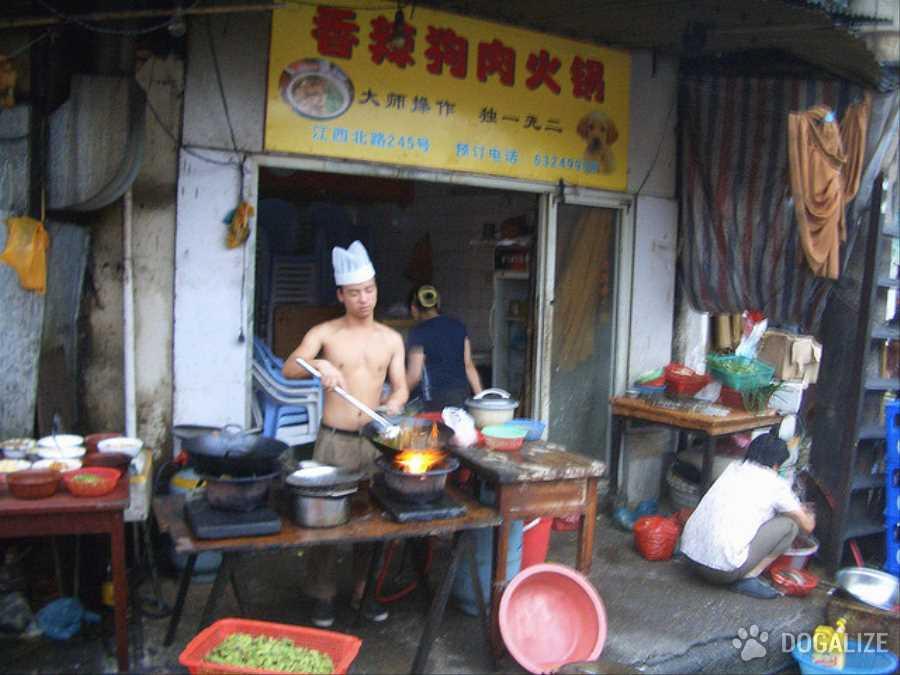 Venditore di carne di cane della provincia cinese di Hunan muore accidentalmente con balestra avvelenata che usava per uccidere i cani