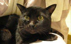 Gatto non mangia più: muore il suo papà umano | Dogalize
