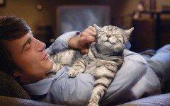 Perros y Gatos: Te quieren igual?