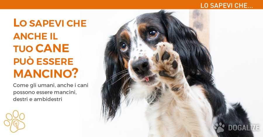 Cane Mancino: Come sapere se i cani sono destri o mancini?