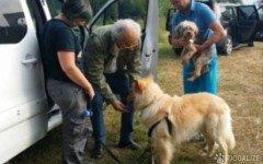 Cane veglia e salva il suo amico 4 zampe