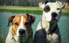 Cosas que pueden fastidiar perros: ¿cuales?