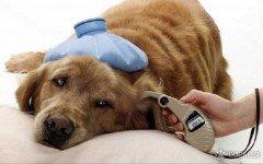 La diabetes es muy comun entre perros y gatos
