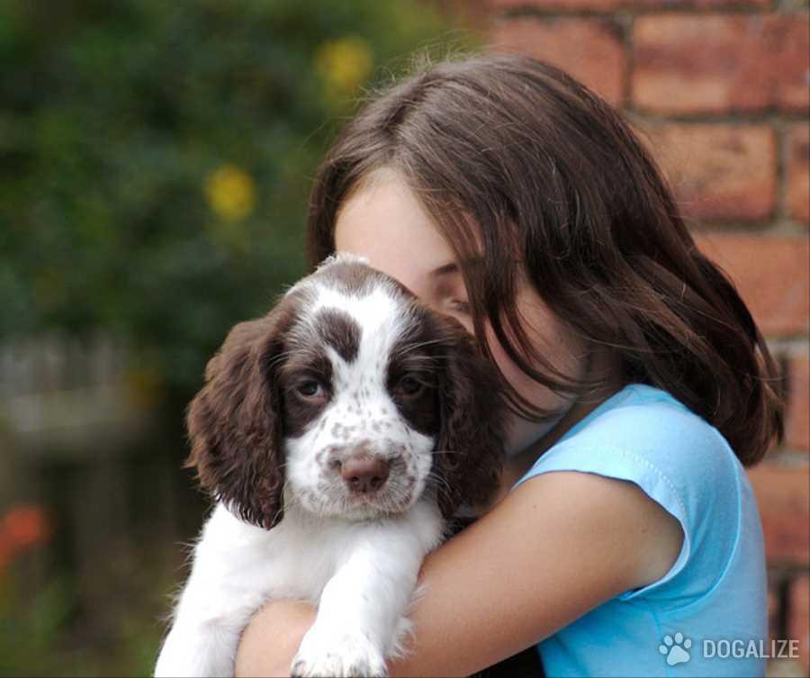 L'arrivo di un cucciolo a casa: Cosa sapere?