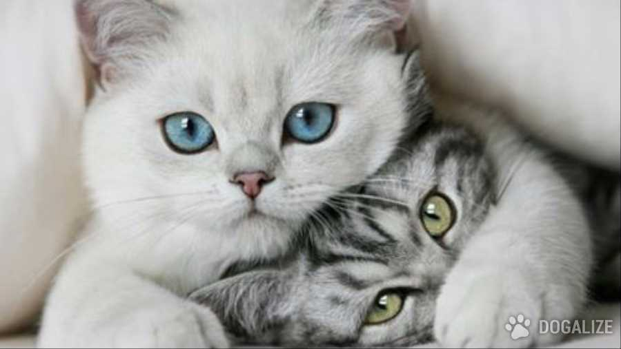 Gatti avvelenati per vendetta dal vicino