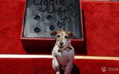 """Perro famoso: saludamos a Uggie, el protagonista en """"The Artist"""""""