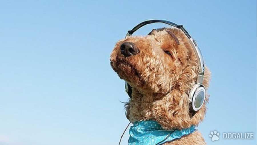 Tu perro ama la musica!
