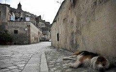 cani avvelenati Palermo