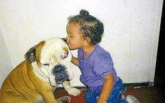 10 razones para amar a tu mascota!