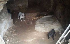 Tres detenidos por robar perros, y hacerlos pelear