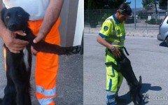 Cagnolino vagante sulla Salerno adottato dall' Anas