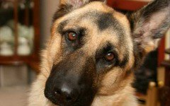 Segnali animali: comportamenti segreti del tuo amico a 4 zampe