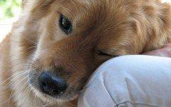 Sono ben due gli interventi di salvataggio dei Vigili del Fuoco che si sono verificati a favore di due cani in seria difficoltà.